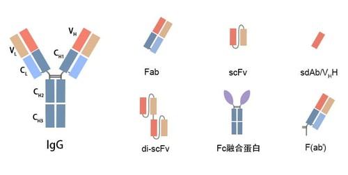 scFV Fab構建.jpg