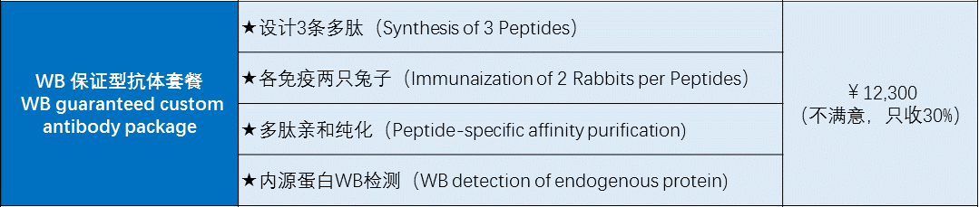 常規兔源多克隆抗體制備(Rabbit Polyclonal Antibody Service)