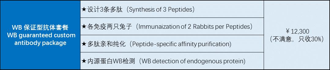 常規兔源多克隆抗體制備(Rabbit Polyclonal Antibody Service)
