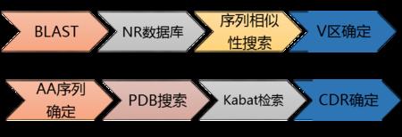 抗体人源化.2.png