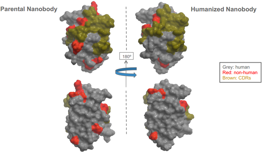 人源/人源化納米抗體制備;Human or Humanized Nanobody Production