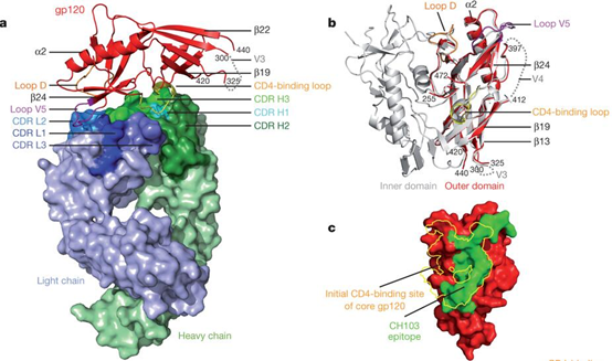 X-射線晶體學;Epitope Mapping by X-ray Crystallography