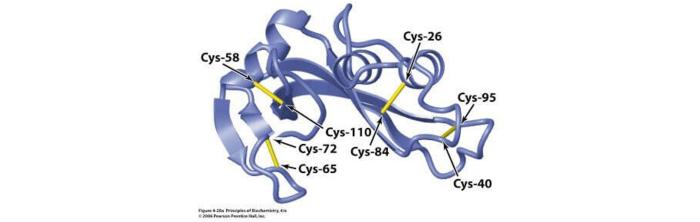 定制半胱氨酸改型抗體.png