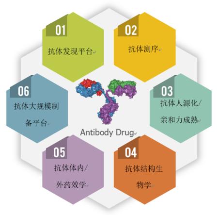 抗體測序, 抗體人源化/親和力成熟, 抗體結構生物學