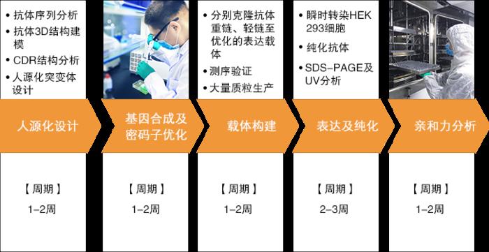 抗體人源化服務.3.png