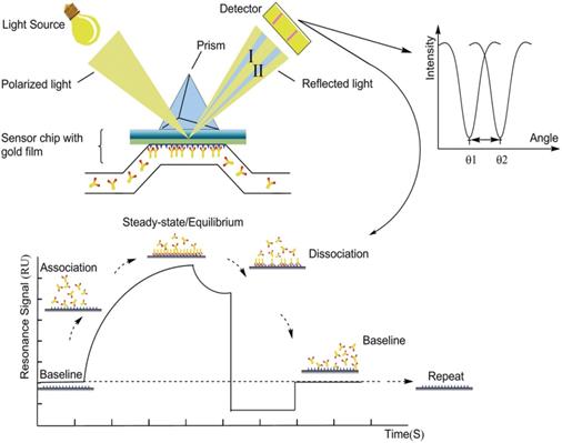 抗體親和力檢測, SPR