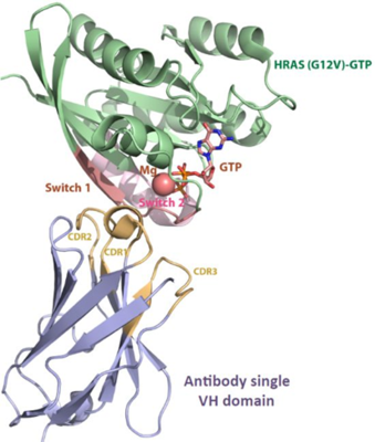 基于生物信息學預測;Epitope Prediction for the Identification of Antibody Epitopes