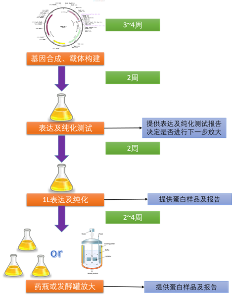 枯草芽孢桿菌表達系統;Protein Expression in Bacillus subtilis